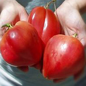 Oxheart Giant Red OP- Heirloom Tomato