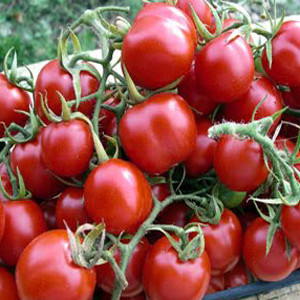 Cherry Small Red -Heirloom- OP -Tomato