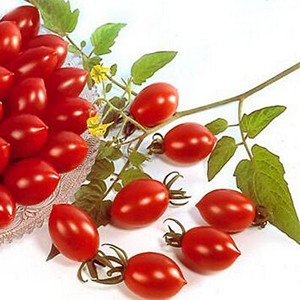 Cherry- Sugary Cherry Tomato