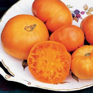Amana Orange Heirloom OP Tomato