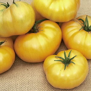 Azoychka Heirloom OP Tomato