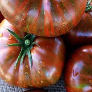 Chocolate Stripes Heirloom OP Tomato