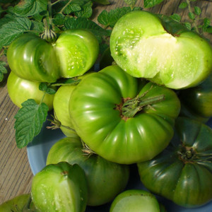 Aunt Ruby's German Green Heirloom OP Tomato