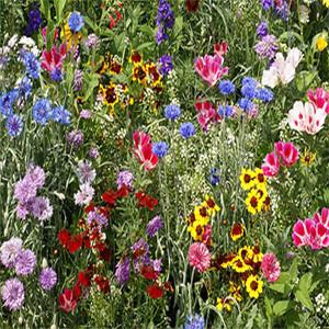 Butterflies and Birds Wildflower Seed Mix