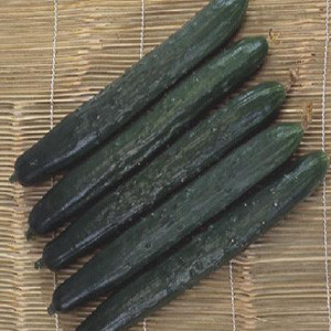 Cucumber - Shintokiwa Long-Fruited - Asian Vegetable