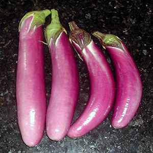 Eggplant Chinese Ping-Tung - Asian Vegetable