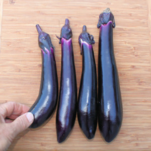 Eggplant Japanese Millionaire - Asian Vegetable Seeds