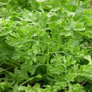 Cress Leafy Wrinkled & Curled- Garden - Asian Vegetable