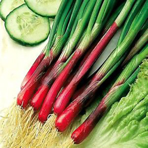 Onion Red Beard Bunching - Asian Vegetable