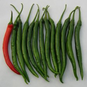Pepper- Prik Chi Faa Thai Medium Hot- Asian Vegetable