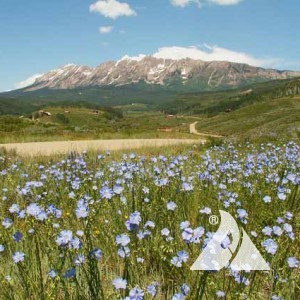 Foothills -Rocky Mountain Pollinator Seed Mix- 1 OZ