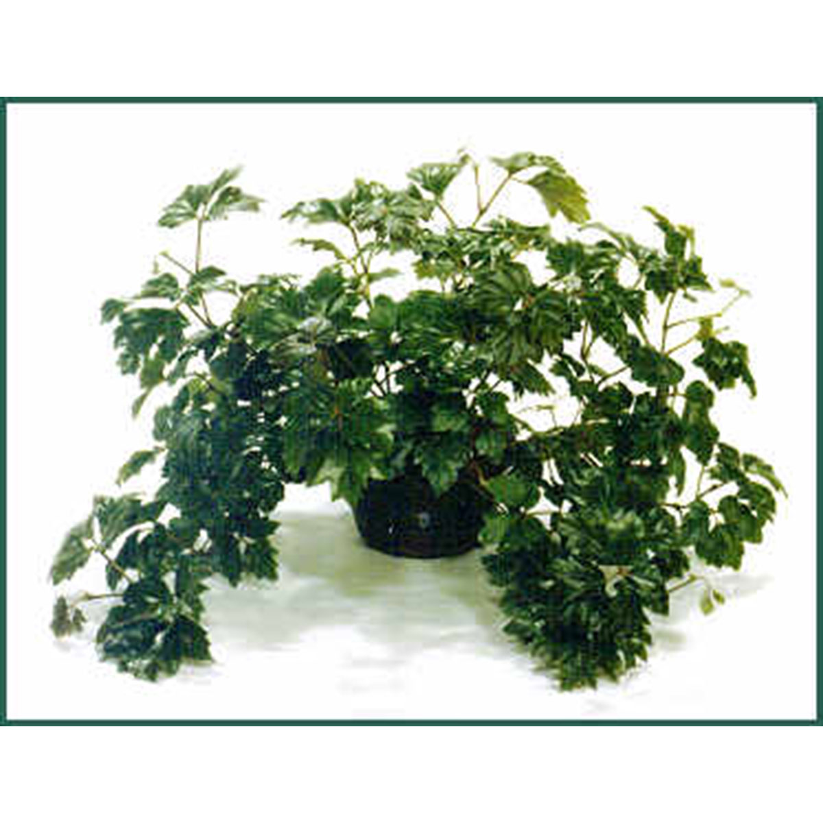 Our top 5 pet friendly indoor plants hip hound for Easy houseplants safe for pets