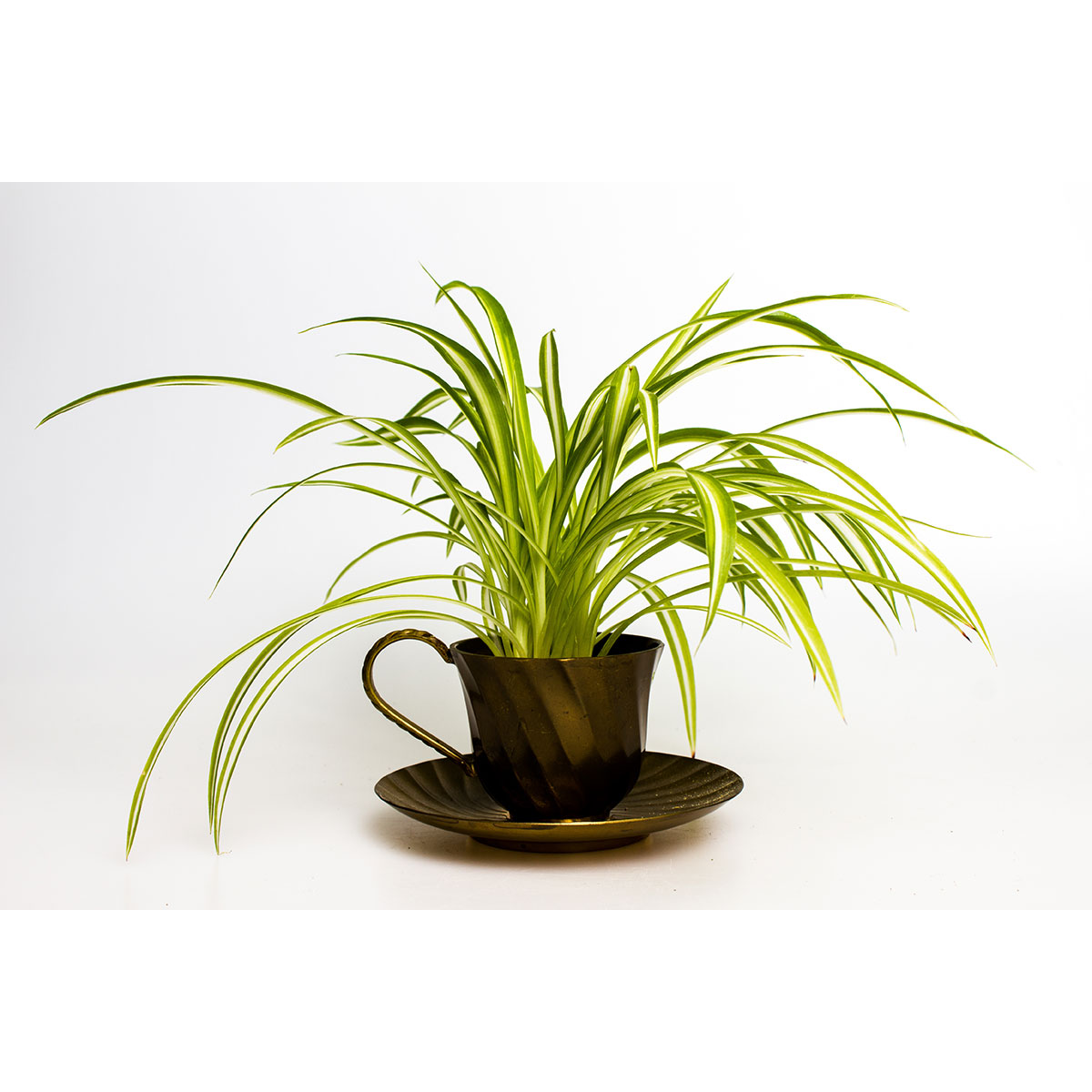 Our Top 5 Pet-Friendly Indoor Plants - Hip Hound