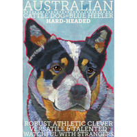 Ursula Dodge Australian Cattle Dog