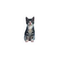Spinny the Kitten Die-Cut Magnet