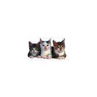 Three Kittens Die-Cut Photographic Magnet