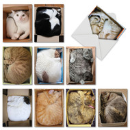 M4623OC - Square Cats: Assorted Set of 10 Cards