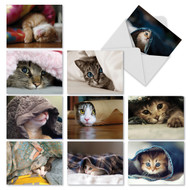 M1543 - Cat You See Me Now?: Assorted Set of 10 Cards