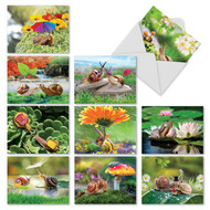 M2349TY - A Snail's Pace: Assorted Set of 10 Cards