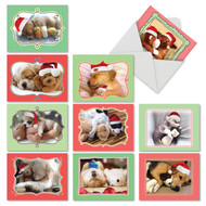 M6469XS - Cuddle Buddies: Assorted Set of 10 Cards