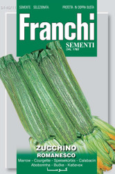 ZUCCHINI (Zucchino) romanesco