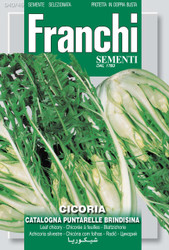 CHICORY (Cicoria) catalogna puntarelle brindisina