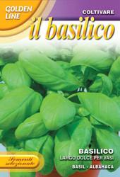 BASIL (Basilico) largo dolce pe vasi