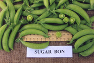 SUGAR SNAP PEA Sugar Bon