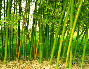 yarn-bamboo.jpg