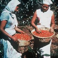 Dean's Beans Mexican Chiapas
