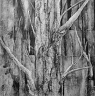 'Through the Woods I' - Sachiko Beck