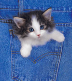 Kitten 240 21c 4 Artist Micro Fiber Cleaning Cloth