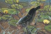 Fish Artist 240-08b-1 Micro Fiber Cleaning Cloth